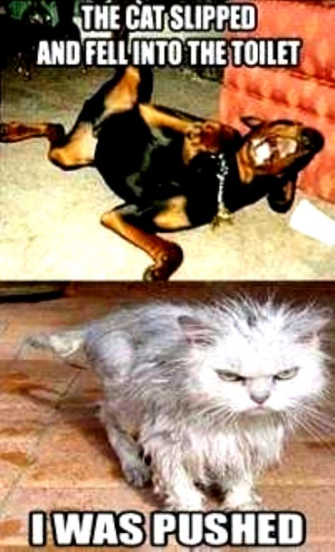 64 Ideas funny cats with captions hilarious pets #cats #funny