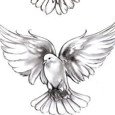Dove Tattoo Meaning And Symbolism In 2020 Dove Tattoos Dove Tattoo Dove Tattoo Design