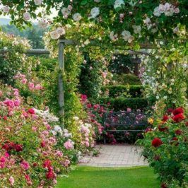 40 Admirable Eden Rose Garden To Enhance Your Beautiful Garden Beautiful Gardens Eden Rose Garden