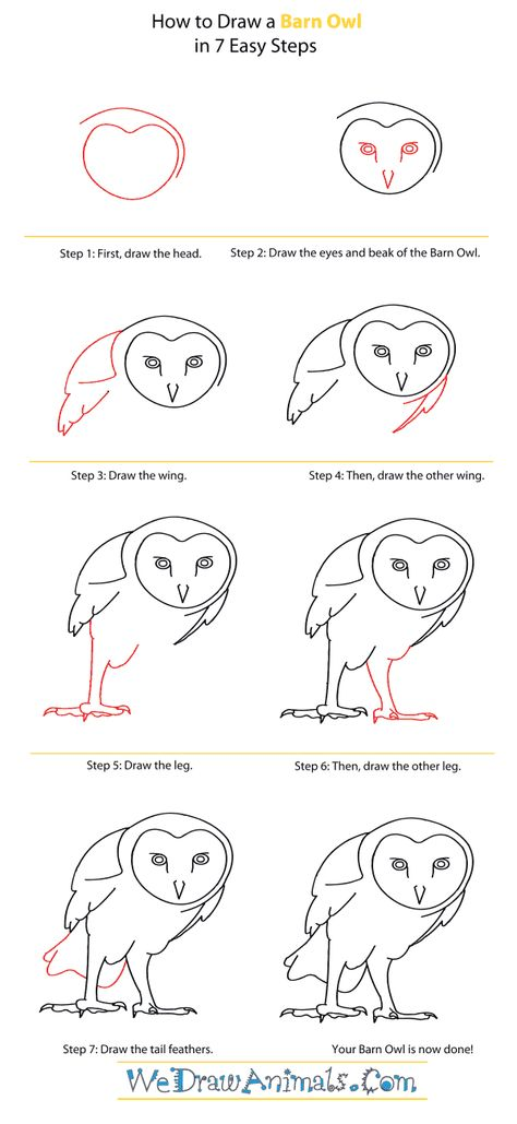 how to draw a barn owl drawing five pinterest barn owl and drawings