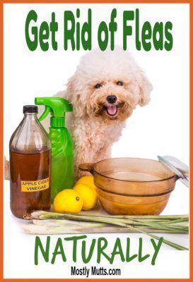 How To Get Rid Of Fleas Naturally Natural Flea Remedies Flea