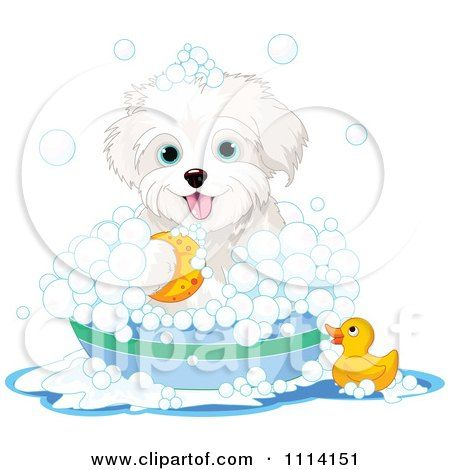 Clipart Cute Bichon Frise Maltese Puppy Bathing With A Duck And