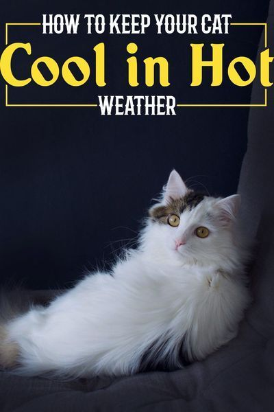 You Can Guarantee A Cool House And A Cool Cat If You Use An Evaporative Cooler Swamp Cooler Or Water Cooler As They Are Sometime In 2020 Cats Cat Facts Cat Problems