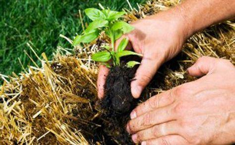 bf7733ac905e01ae6f99214cddc73331  hay bales straw bales - Hay Bale Gardening Effortless Food Production