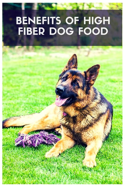 High Fiber Dog Foods That Ll Make Any Tail Wag Therapy Pet Hip Dysplasia Dogs Large Dog Breeds