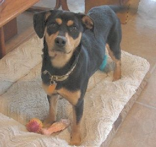 Adopt Sally On Petfinder Dogs Dog Rescue Groups Miniature Pinscher Dog