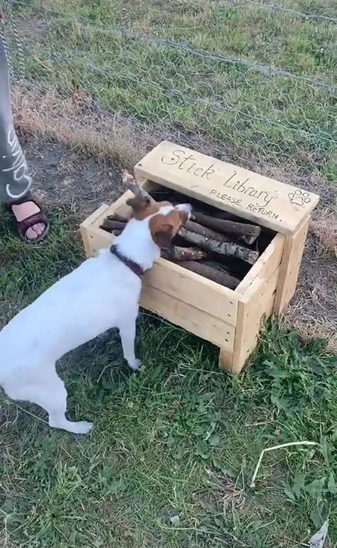 Paw-fect NZ human creates 'stick library' for local dog park because of lack of 'good sticks' Shelter Dogs, Animal Shelter, Animal Rescue, Puppy Playground, Dog Backyard, Backyard Ideas, Backyard Playground, Dog Enrichment, Dog Garden