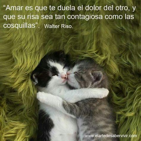 Amar Es Frases Abrazo Gato Gato Durmiendo Y