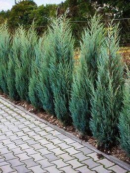 Retro Kitchen 60 Amazing Decor Ideas To Check Out In 2020 Outdoor Landscape Design Garden Shrubs