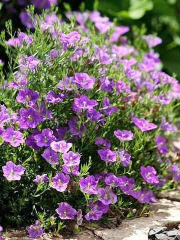 Best Of The Best Award Winning Annuals Annual Garden Annual