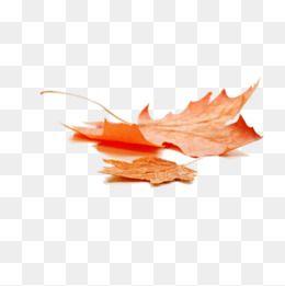 Yellow Autumn Autumn Leaves Deciduous Leaves Bleak Autumn Wind Two Leaves Dry Orange Leaves Deciduous Wind Two Fall Leaves Png Autumn Leaf Color Autumn Leaves