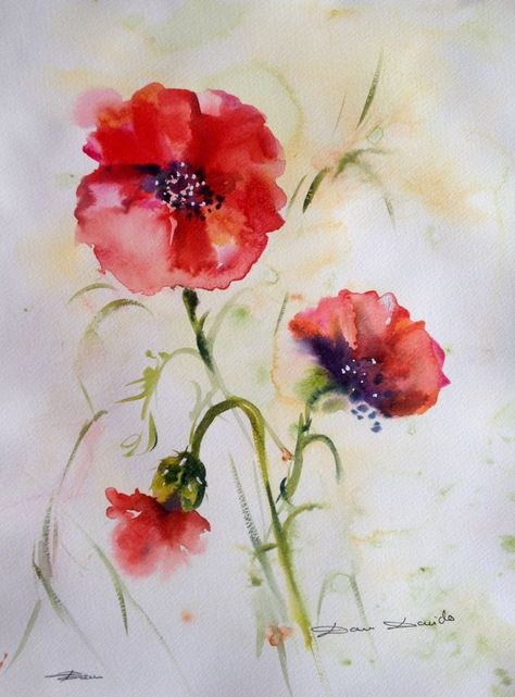 Aquarelle Originale Dam Domido Coquelicots Poppy Fleurs Flowers