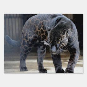 Create Your Own Yard Sign Zazzle Com In 2021 Melanistic Animals Animals Beautiful Animals