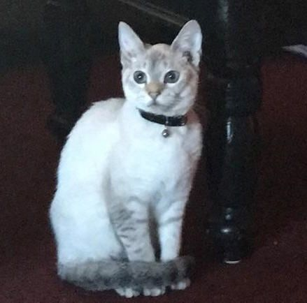 Punish Person Who Shot And Killed 10 Month Old Kitten 10 Month Olds Kittens Kitten Names