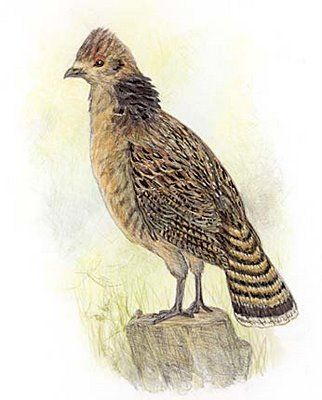 pennsylvania state bird ruffed grouse