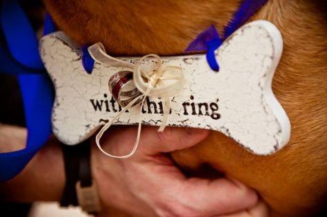 Ringträger für Ihre Hochzeit gesucht? Unser Tipp: Hunde sind die besten für den Job! Image: 10