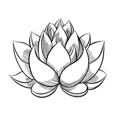 123rf Millions Of Creative Stock Photos Vectors Videos And Music Files For Your Inspiration And Lotus Flower Art Lotus Flower Painting Lotus Flower Drawing