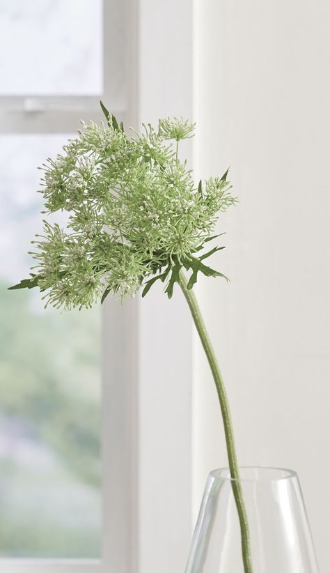 Bundle our lifelike stems of Queen Anne's Lace for a simple display, or use them as textural filler with other faux florals or greenery. Each stem can be cut to a desired length and bent for styling. Three stems in the set.