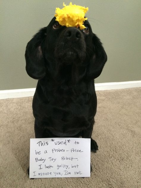 """Dog Shame 