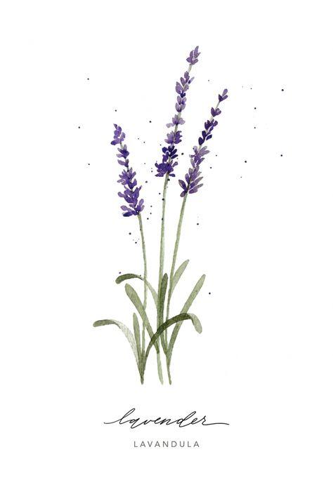 giclée print:: lavender herb | Ashley Bunten Art + Design