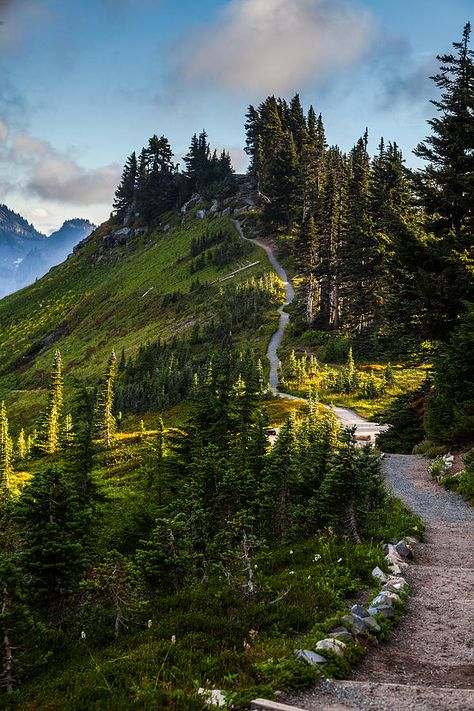Alta Vista Trail -- Mt. Rainier  National Forest