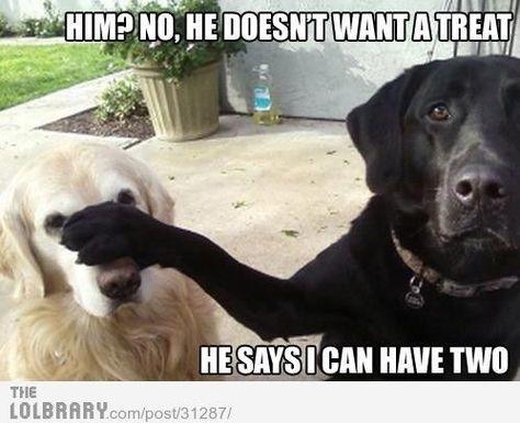 Funny joke. Dog joke. Clean joke. Labrador joke. Golden retriever joke.