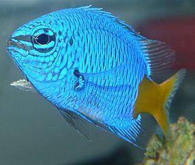 Pin Op Exotische Vissen