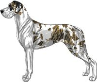 Brindlequin Great Dane Facts Great Dane Colouring Pics