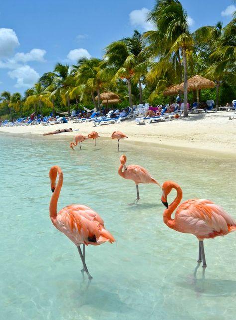 Awesome Beaches with Wildlife. One of them: Flamingo Beach Aruba More here: http://beachblissliving.com/wildlife-beaches/