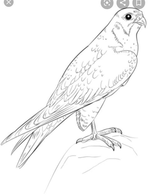 21 vogel malvorlagenideen  vogel malvorlagen