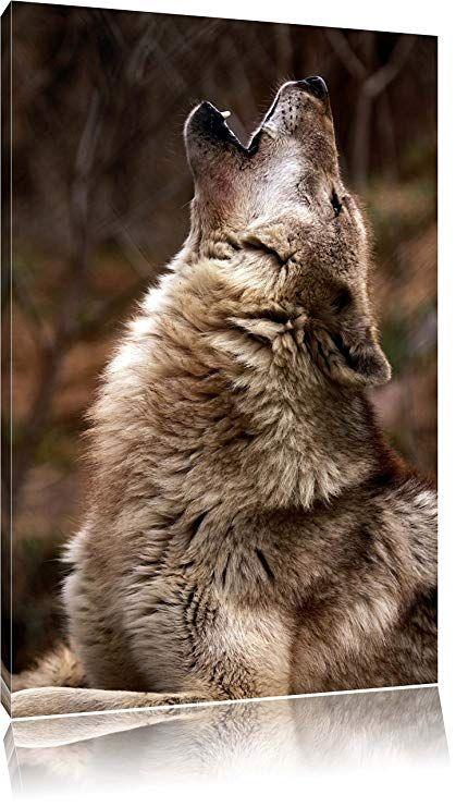 heulende wolfe format 60x40 cm auf leinwand xxl riesige bilder fertig gerahmt mit keilrahmen kunstdruck wandbild wolf howling art pictures leinwanddruck rahmen poster drucken lassen