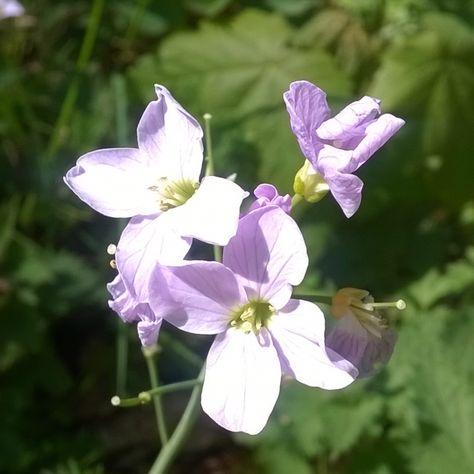 #flower #plant #nature #naturalform #photography #art #colour #color #detail #summer #purple #pink http://tipsrazzi.com/ipost/1511096618072739259/?code=BT4fl41hQ27