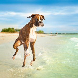 The 50 Best Places To Travel In 2019 Dog Friendly Beach Dog Beach Florida Beaches