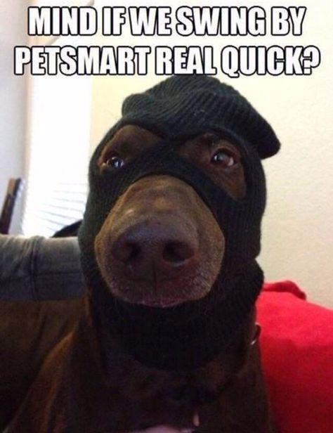 Mind If We Swing By Petsmart Funny Dog Pictures Funny Dog Memes Animal Jokes