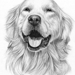 27 Amazing Picture Of Golden Retriever Coloring Page Cute Dog