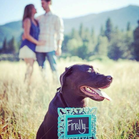 Even the dog can't believe it took you this long to get engaged.