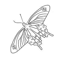 Top 50 Free Printable Butterfly Coloring Pages Online Coloring