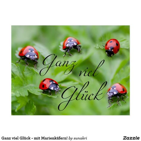 Ganz viel Glück - mit Marienkäfern! Postkarte