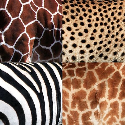 Beautiful Authentic Patterns of African Animals. Indeed ALL Living Things Have A Natural Beauty!