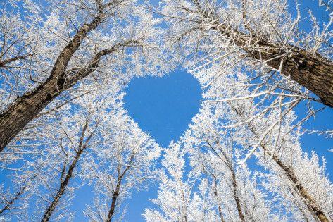 Hearts in Nature Lake Pupuke, Aukland New Zealand Winters Natural Heart-Aww Sooo Beautiful. Nature is amazing Greece