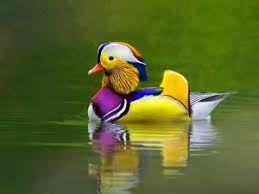 Bird Whatsapp Dp Profile Pics Hd Download Whatsapp Dp Images Dp Photos Whatsapp Profile Wallpaper