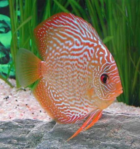 Aquarium de Discus - Un aquarium dans votre entreprise-