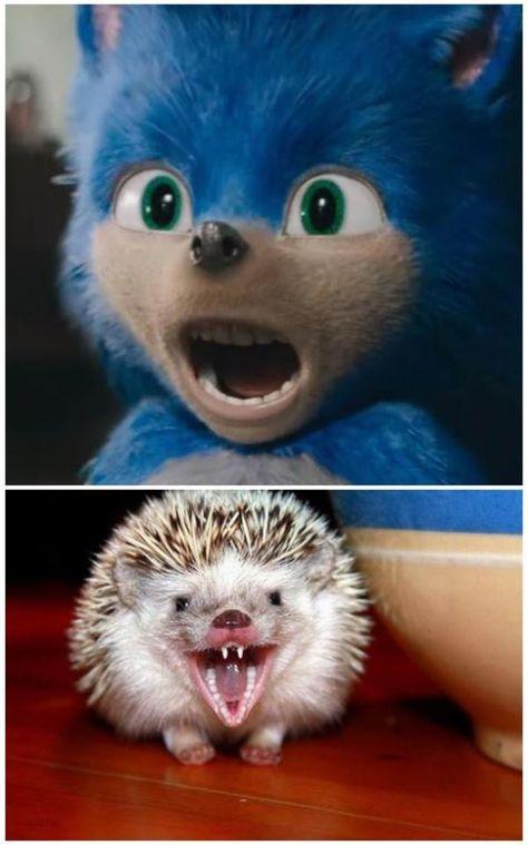 Hedgehog Teeth Hedgehog Teeth Sonic The Hedgehog Hedgehog