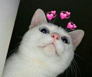Pin By Debbie Wice On Cats Cute Cat Memes