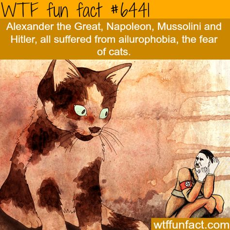 Hitler had a fear of cats - WTF fun facts I've heard cats drive away evil coincidence I think not Wow Facts, Wtf Fun Facts, Funny Facts, Funny Memes, Random Facts, That's Hilarious, Fun Funny, Gi Joe, What The Fact