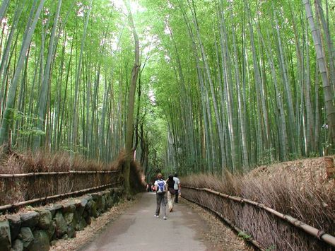 Bamboo Forest in Prattville AL: so cool!