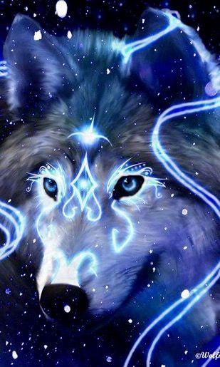 Fotos lindas de lobos algumas com frases