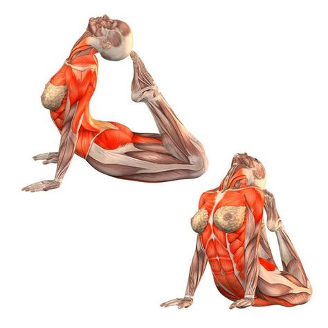 pin about yoga anatomy and yoga fitness on  yogi junkie
