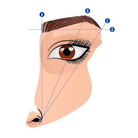 Download Gradient Brow Mapping Illustration for free