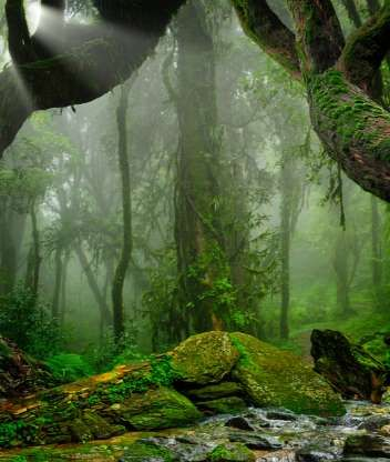 Amazon Rainforest South America As The Largest Tropical